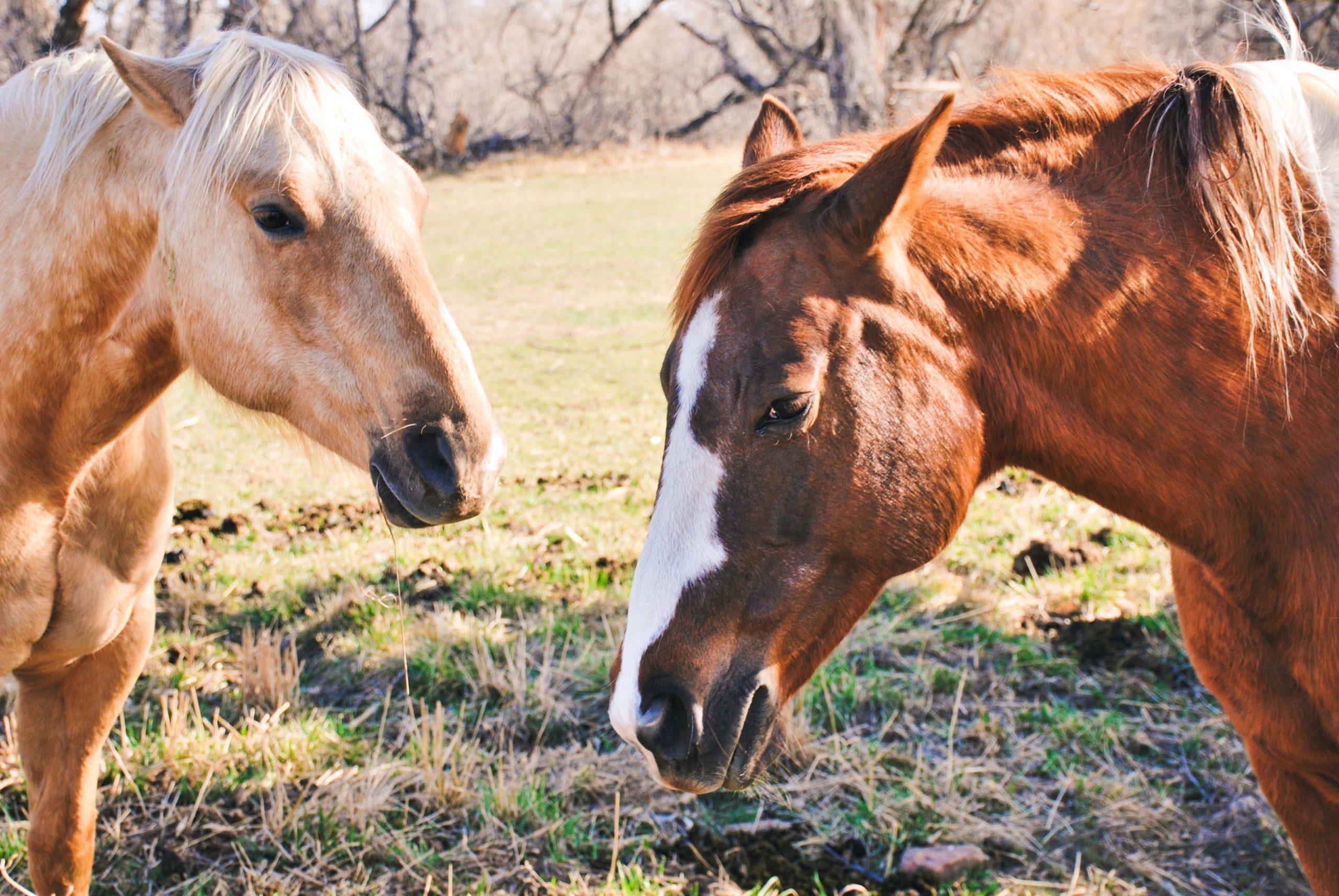 Horse by Lori Heintzelman